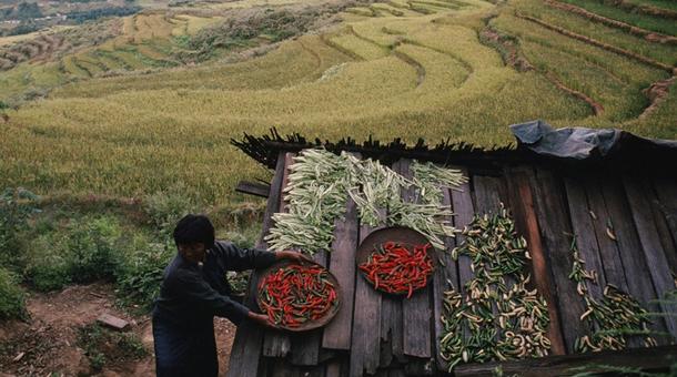 Agricultura en Bután